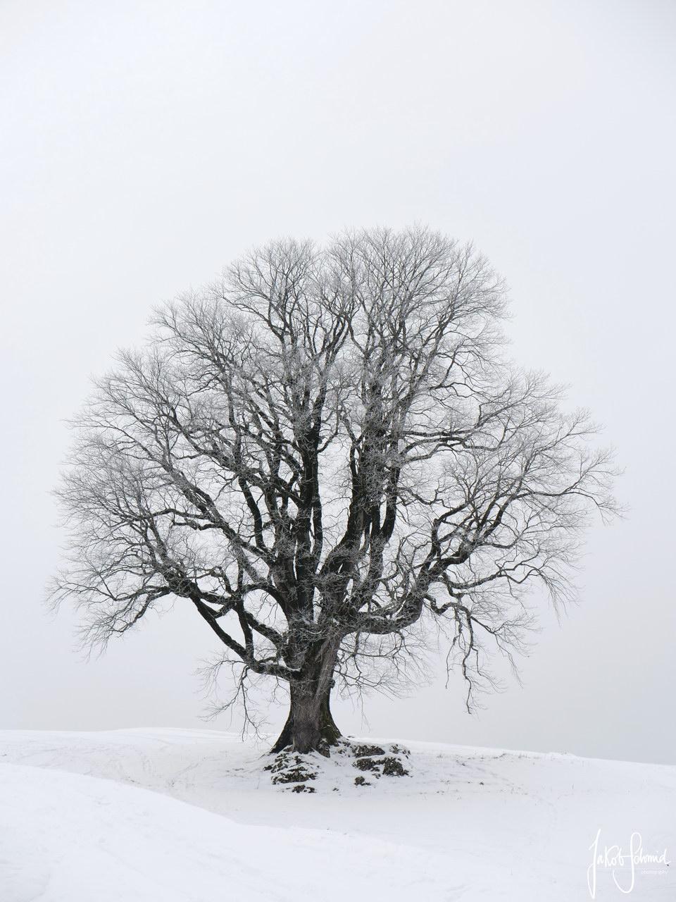 Allgäu Bergulme Winter