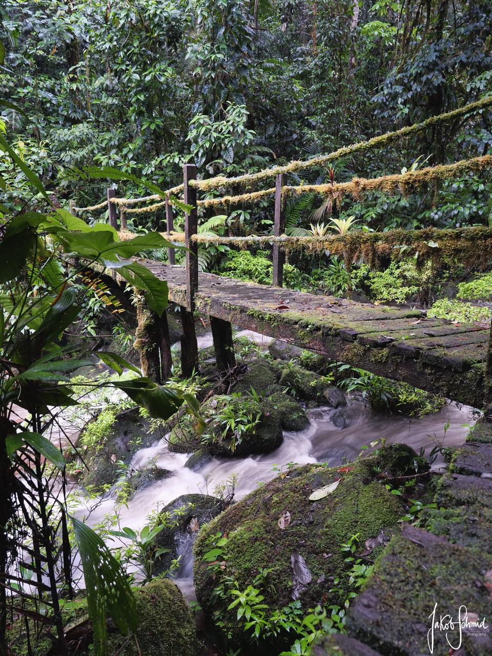 Costa Rica Sarapiqui Regenwald